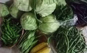 高知野菜.jpg